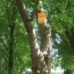 Petits gîtes à insecte et nichoirs IMG 4023
